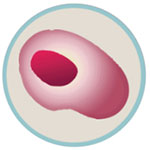 Cord Blood Stem Cells